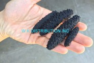 Dried Holothuria Tubulosa Tubular Sea Cucumber