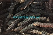 Dried Skinless Holothuria Mexicana Donkey Dong Sea Cucumber (Honduras)